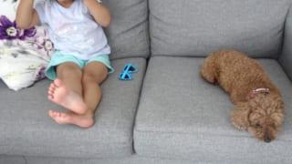 子どもと犬と暮らす家