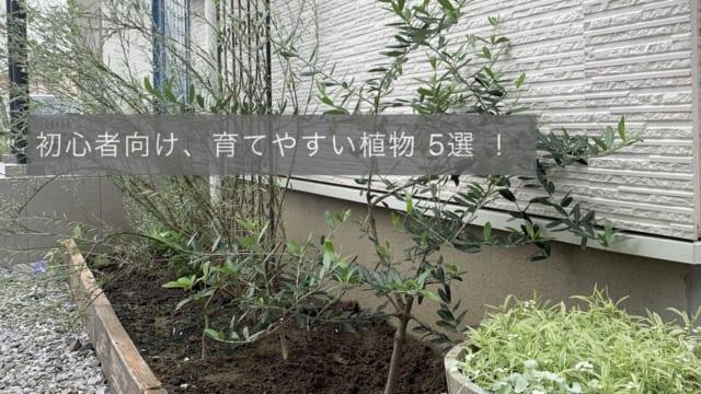 初心者におすすめする植物